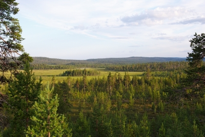 View from the Logging Road