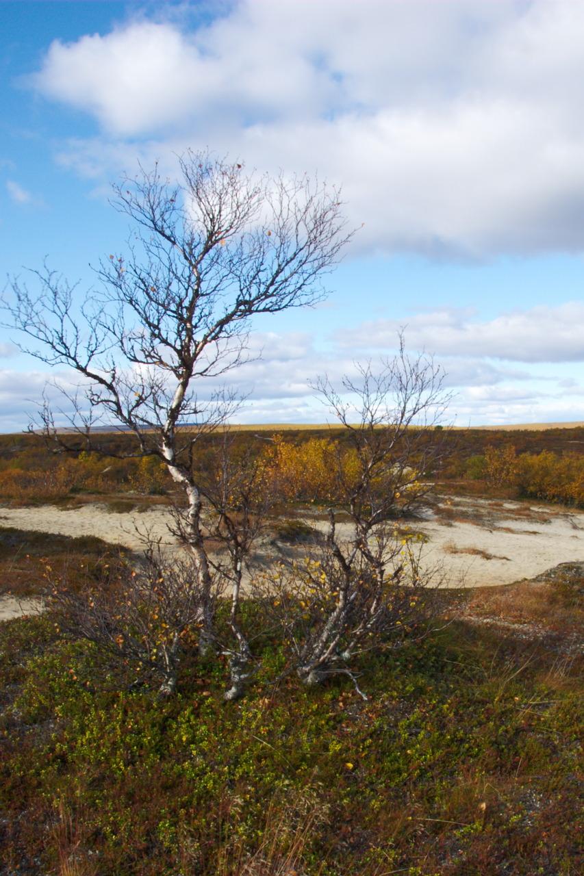 Naltijärvi