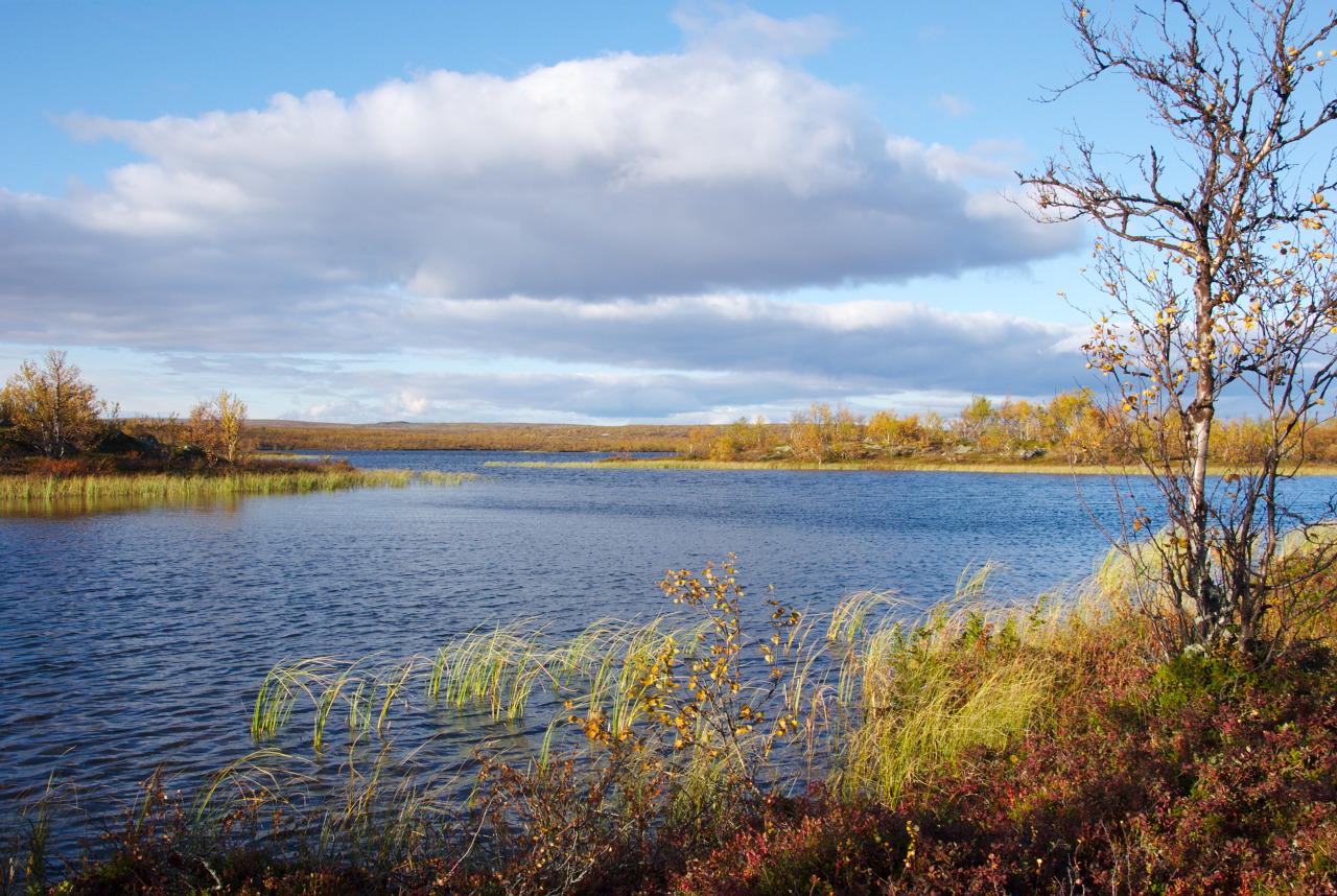 Pierkkujärvi