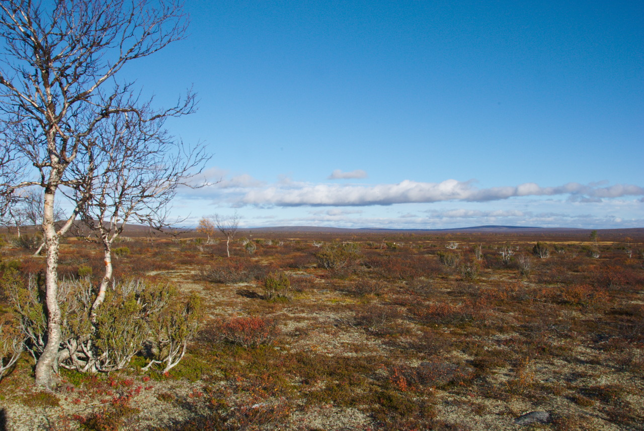 Pöyrisjärvi Wilderness Area