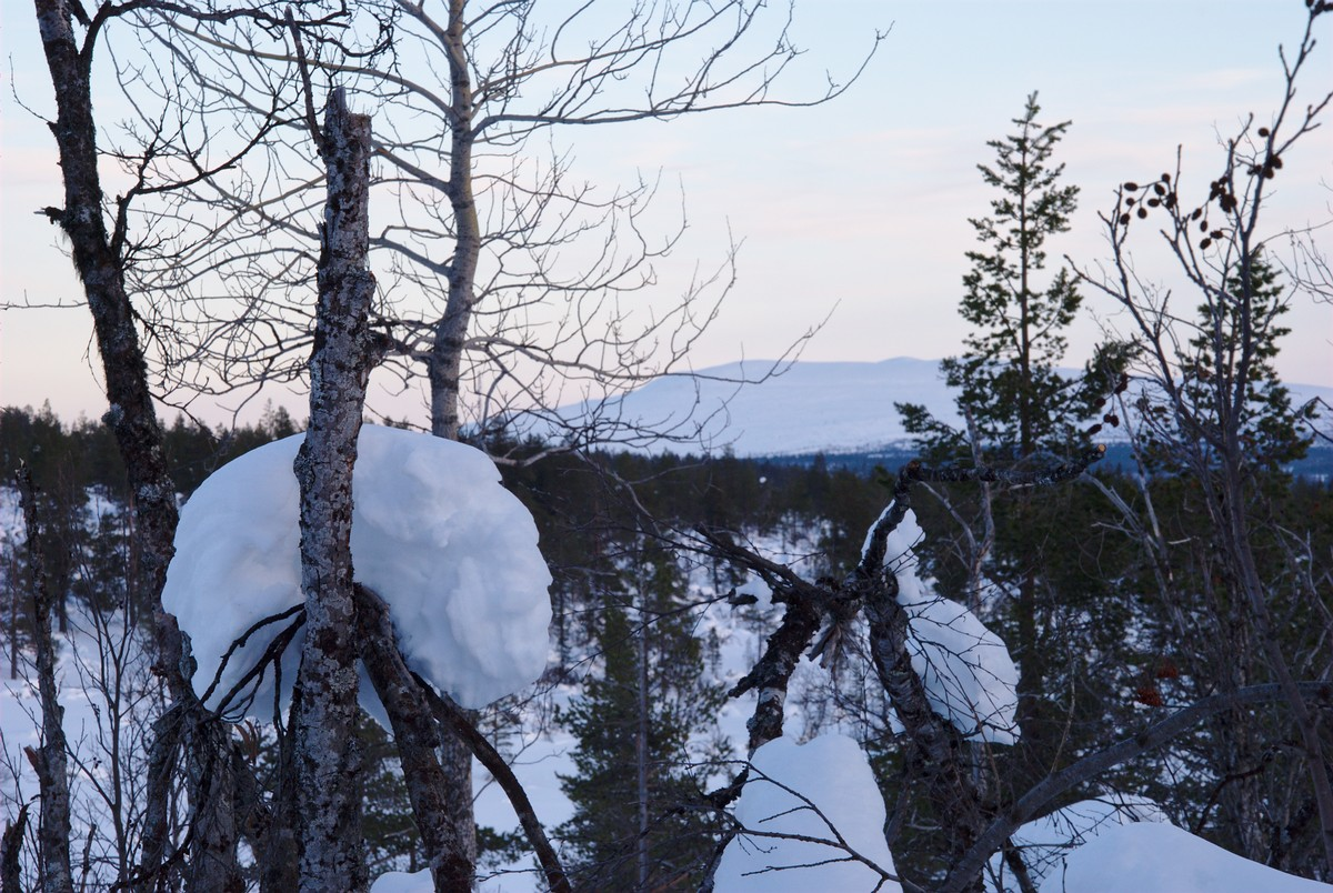 Last Snow on Trees and Pyhäkero in the Background