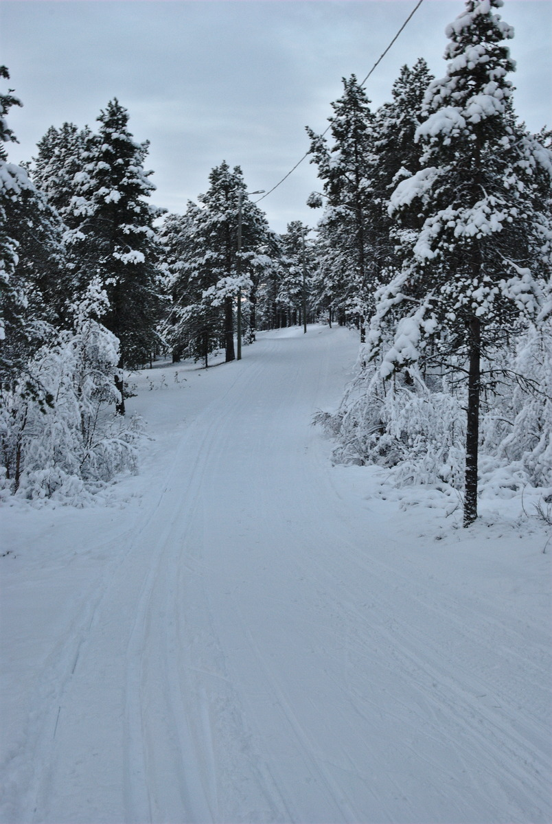 cross country skiing tracks in the forest