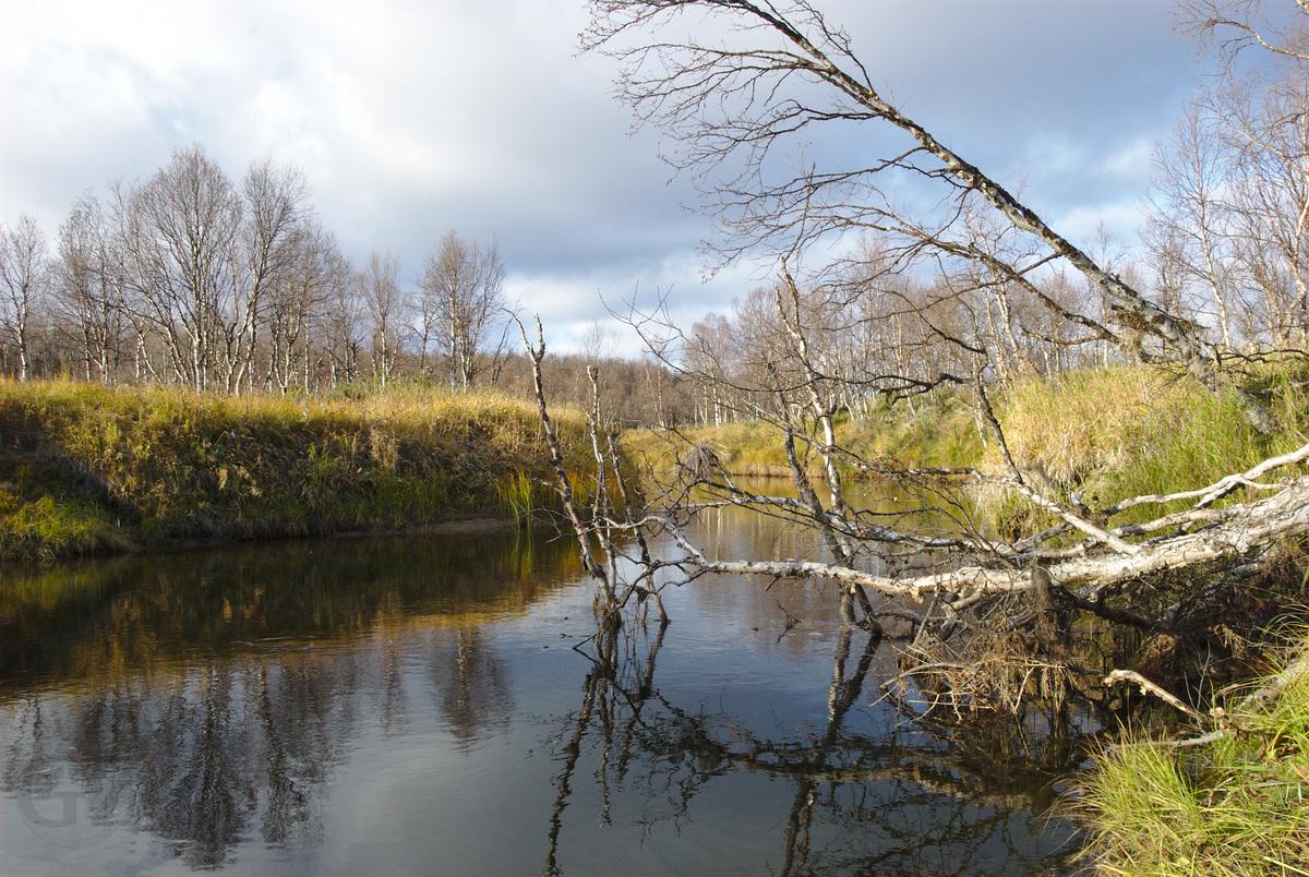 Suukisjoki