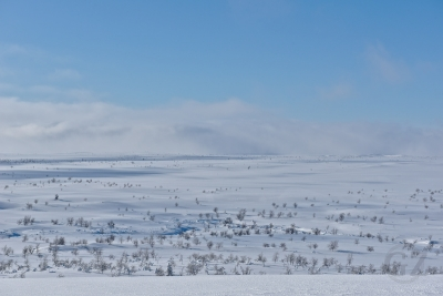 Suomajoki