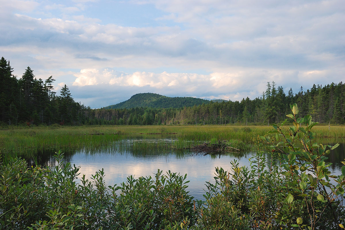Grotton State Forest