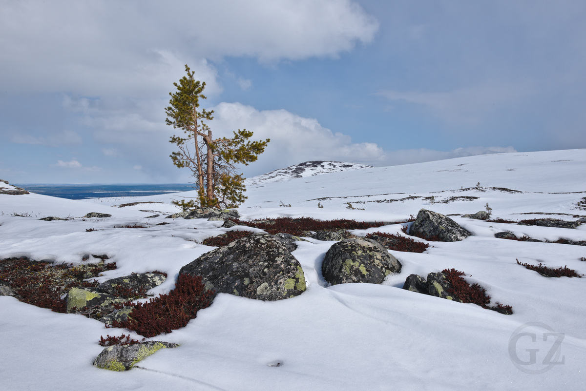 rocks and vegetation coming out of the snow