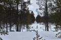 Western border of Ylläs-Pallas National Park