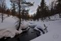Rautujoki