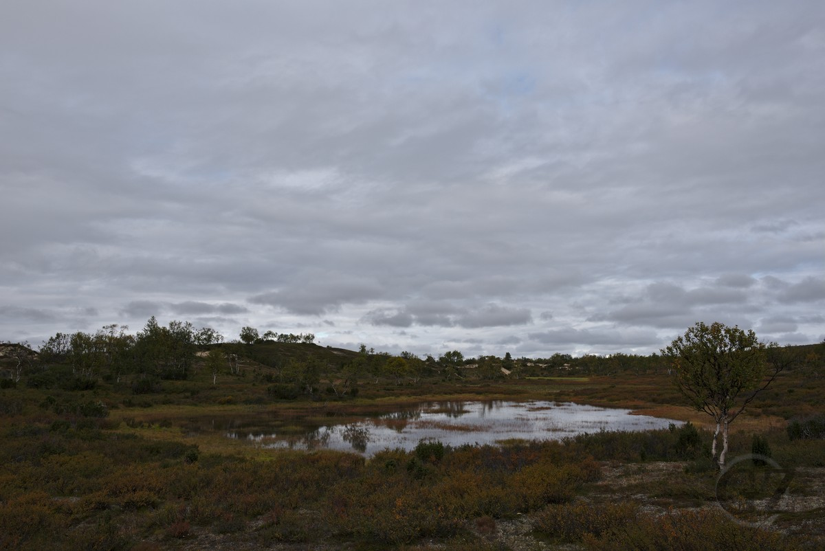 pond, sand dunes, vegetation