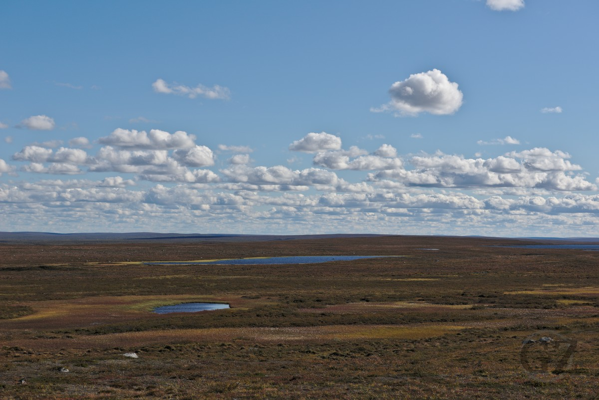 Wide open space, tundra area