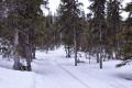 Ski tracks in the valley
