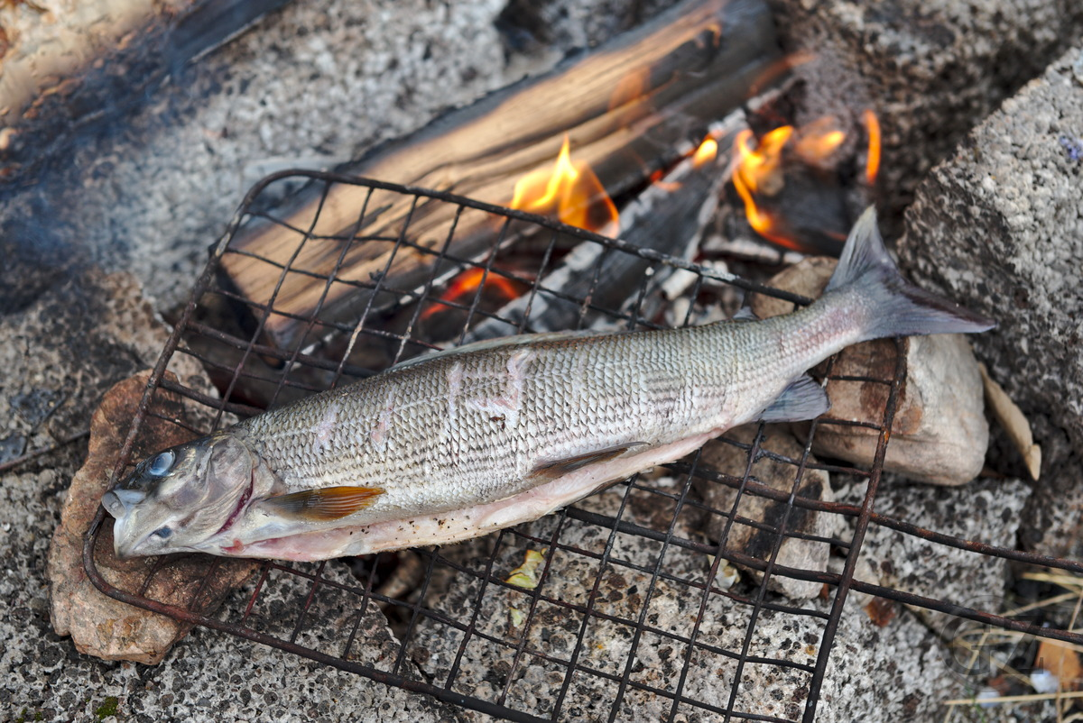 Fish being grilled on open fire