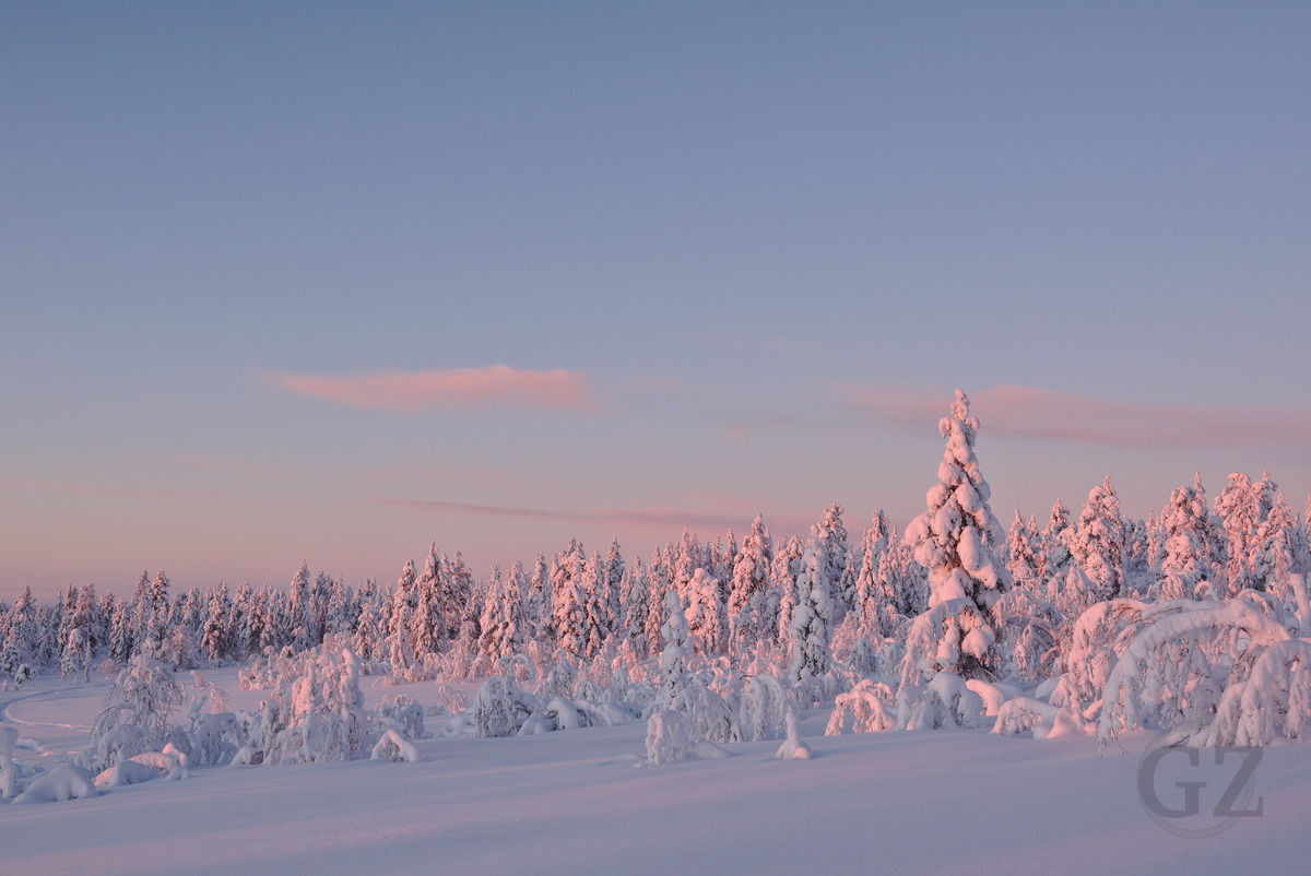 snow covered trees in sun light