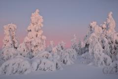 Lights of January