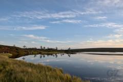 Tundra Pond