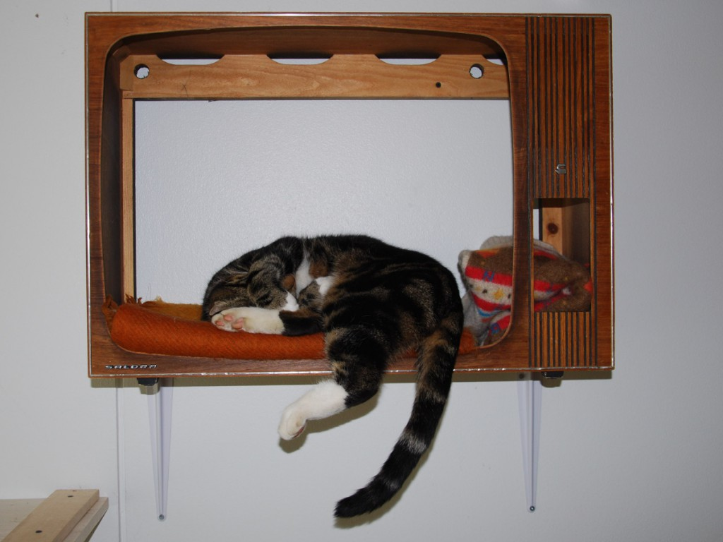 cat sleeping in old tv box